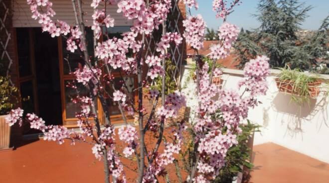 fiori patrizia porcellana