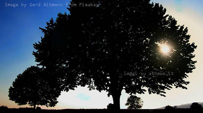 ambiente, albero, alberi,