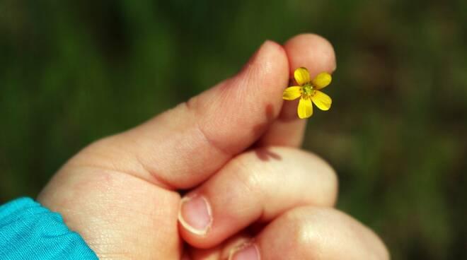 bambino con fiore pixabay
