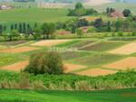 Coldiretti Piemonte, Coronavirus: serve subito liquidità per imprese in crisi  - Campi Agricoli - Agricoltura