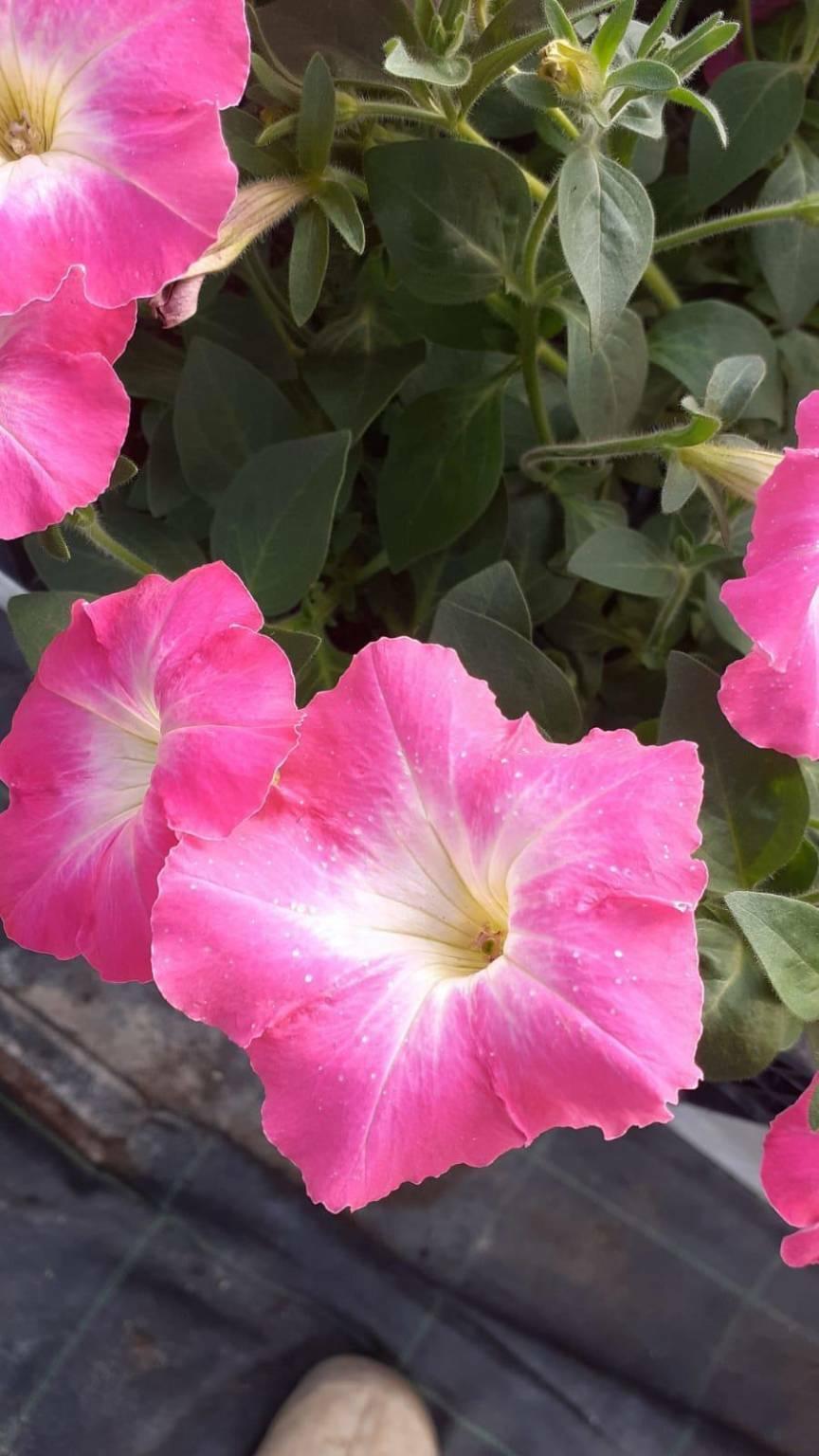 Piante e fiori dall'Associazione Sole che Sorgi alla Casa ...