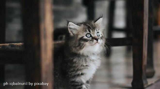 gattino pixabay