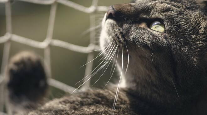 gatto pixabay