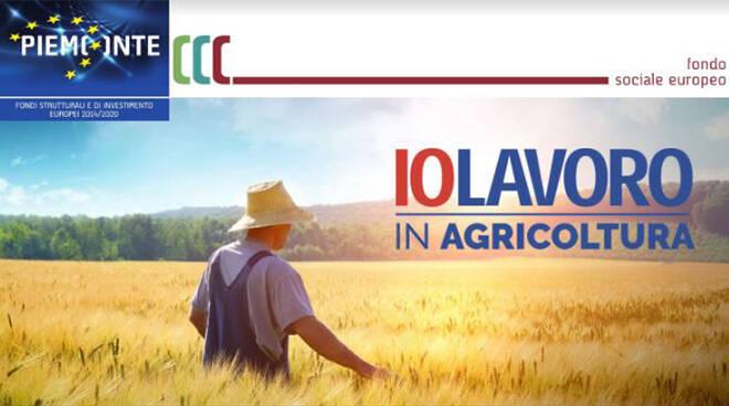 """""""Iolavoro in agricoltura"""": l'iniziativa della Regione Piemonte in aiuto al settore agricolo"""