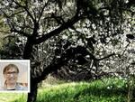mariuccia borio la bambina che abbracciava gli alberi foto giulio morra