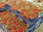 pomodori - Coronavirus: 500 Kg alla settimana di ortofrutta Made in Piemonte alla Caritas