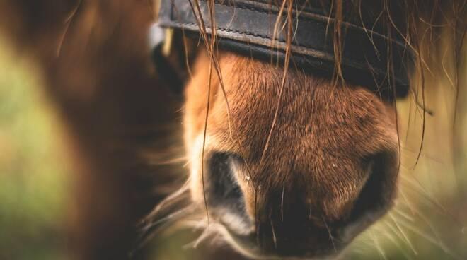 pony cavallo
