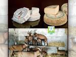 Sostenere il formaggio DOP Piemontese