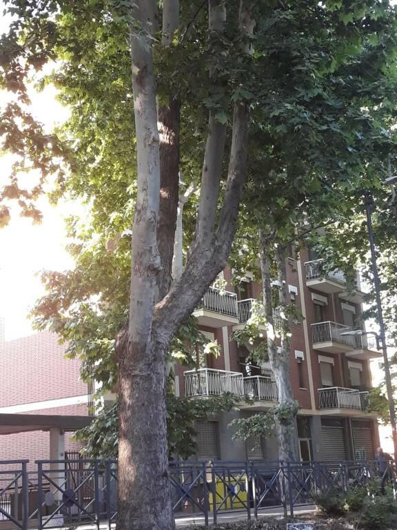 alberi viale pilone asti