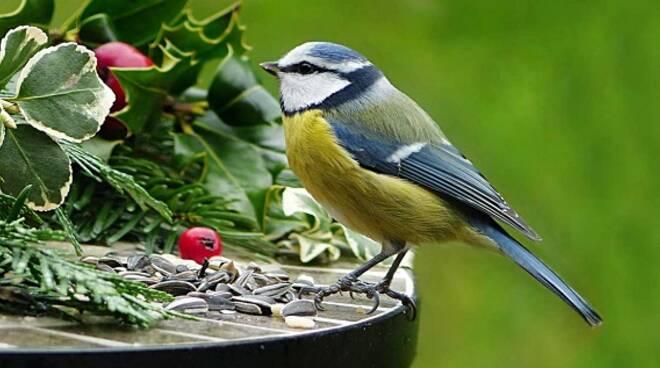 birdwatching di quartiere