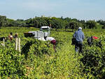 agricoltura in piemonte
