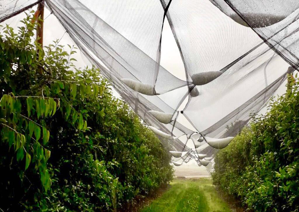 Maltempo: allarme grandine per raccolti Made in Piemonte