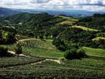 monferrato, vigneti, vigne, colline,