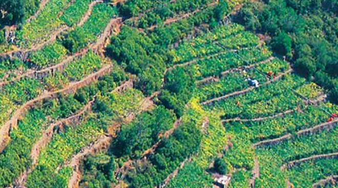 viticoltura eroica