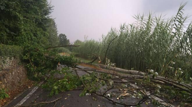 albero caduto san marzanotto strada stangona credit marialuisa fonte gruppo telegram meteo monferrato, langhe e roero