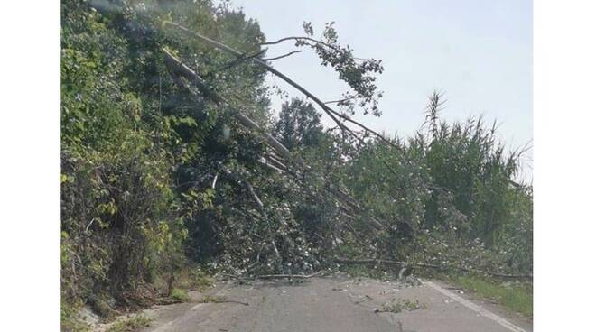 albero caduto strada stangona san marzanotto