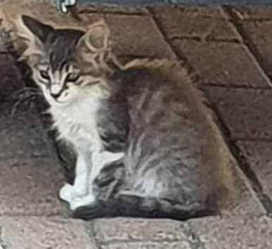 gattini anpa 04082020