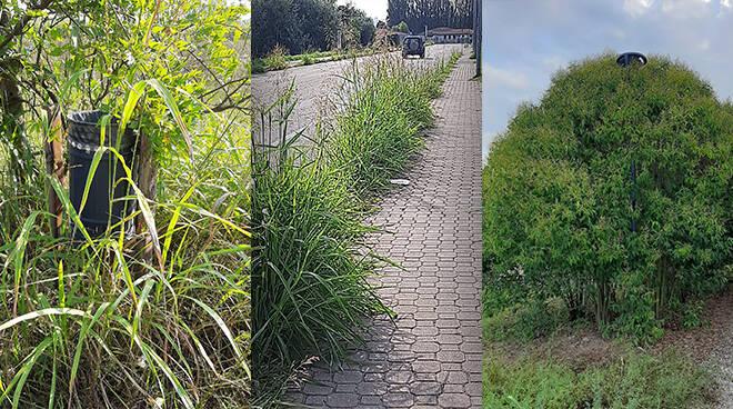 """Parco del Tanaro (e non solo) invaso dalle erbacce, Malandrone: """"Sul preservare il verde non intendevamo questo"""""""