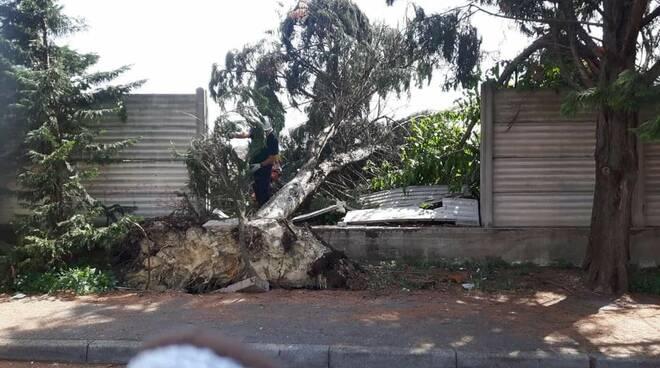 Rimozione albero protezione civile asti