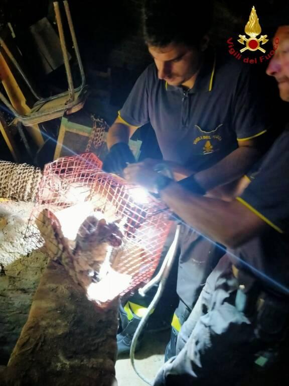 salvataggio gatto vigili del fuoco a moncucco torinese