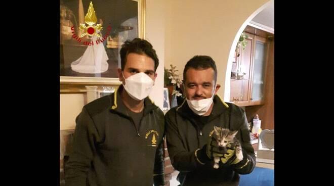 Vigili del fuoco gattino Villanova d'Asti