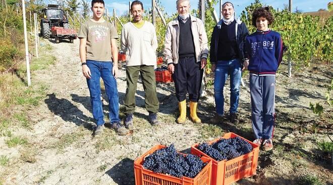 Vendemmia Rocca Cigliè Ph @MattiaClerico L'Unione Monregalese