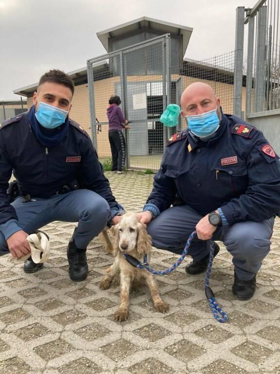 cagnolina salvata da polizia di asti