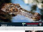 Calendario CITES 2021 dell'Arma Forestale dei Carabinieri