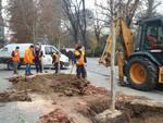 Nuovi platani piantati in Via Rosselli ad Asti