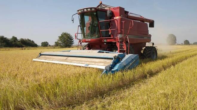 Sviluppo rurale, agricoltura.