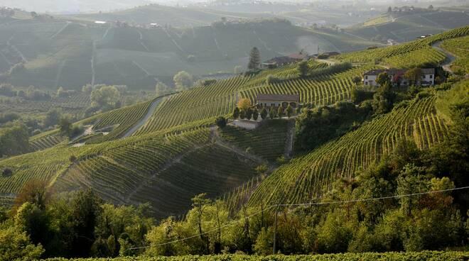 vigne moscato panorama vigne