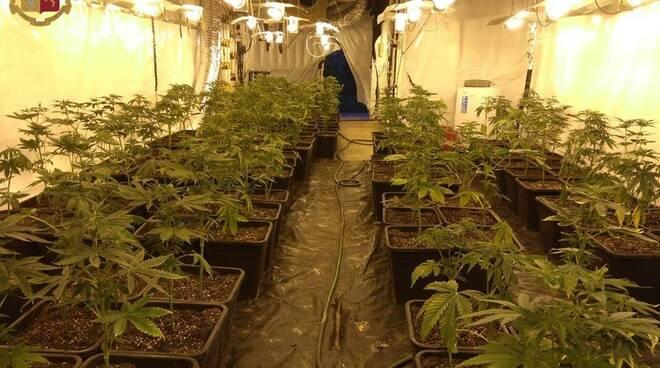 coltivazione marijuana canelli