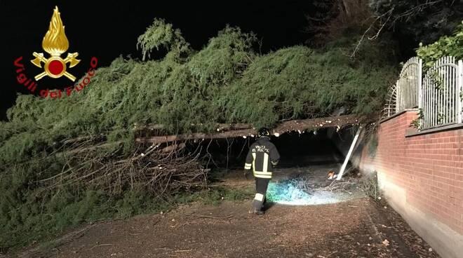 intervento vigili del fuoco portacomaro albero caduto