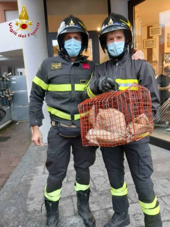 vigili del fuoco salvano gatto