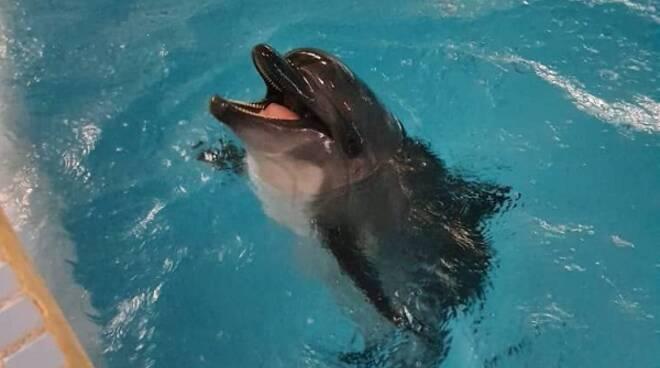 delfina kaisha