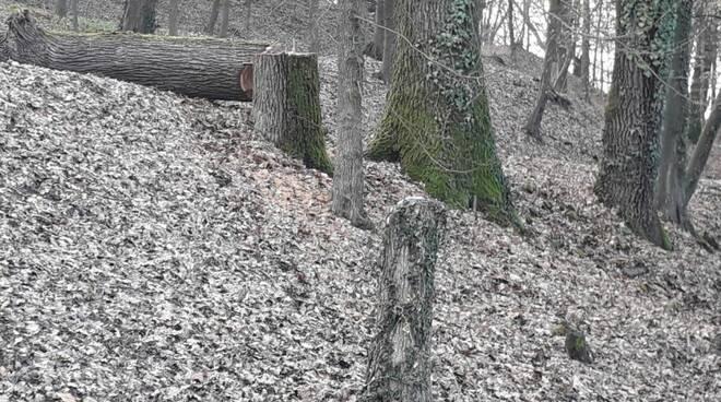 parco del castello di govone taglio alberi