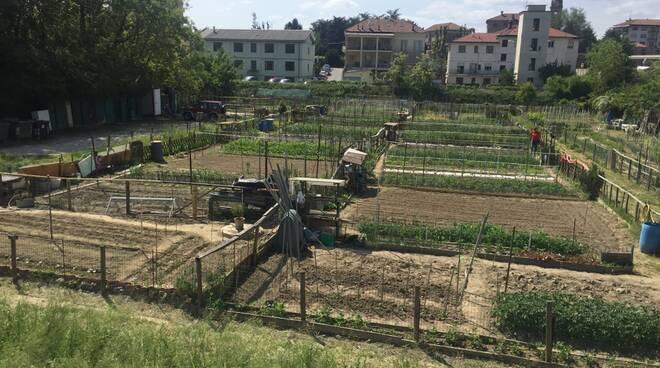Alba: fino al 30 marzo è possibile chiedere un orto urbano