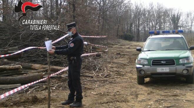 sequestro bosco carabinieri forestali nizza