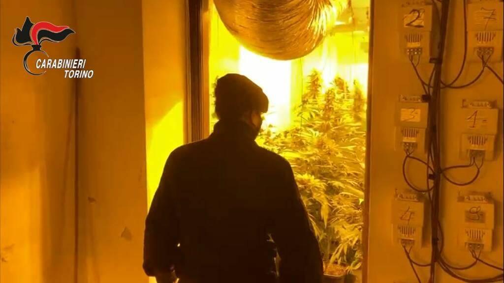 sequestro piantagione marijuana brozolo