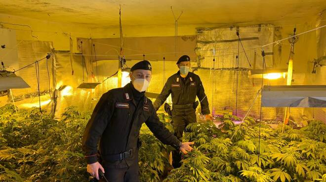 serra marijuana migliandolo