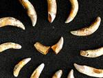 """Asti, """"Fossili e Territori"""": dodici storie di esemplari e luoghi tutti da scoprire"""