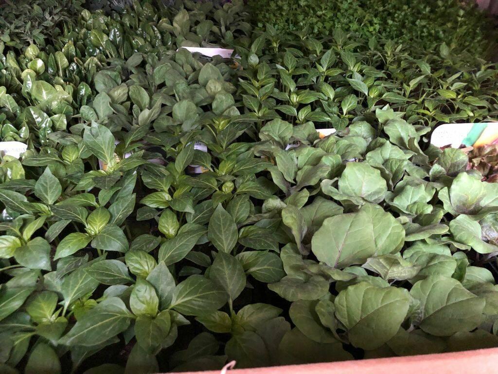 bona orto e giardino