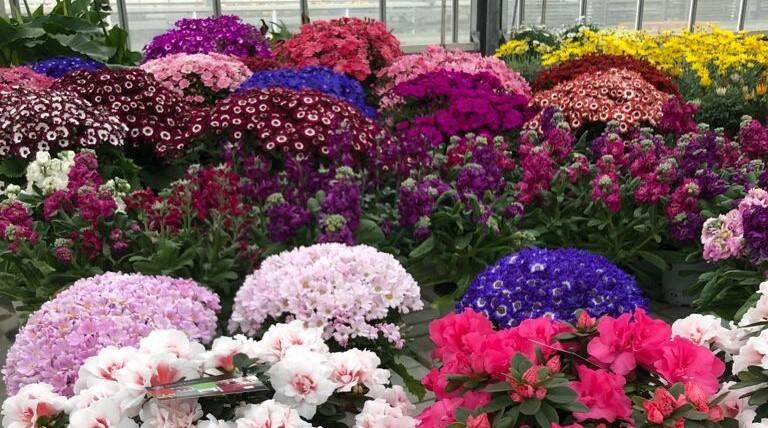 fiori bona orto e giardino