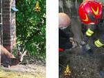 salvataggio animali valfenera vigili del fuoco