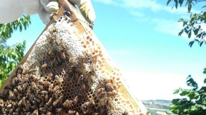 api miele paesaggio