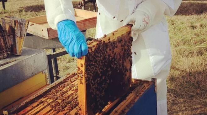 apicoltura astigianio danni