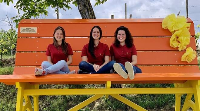 big bench moncucco