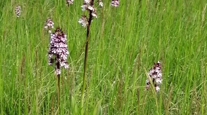 Ponzano Monferrato diventa Custode delle Orchide