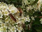 giornata mondiale dell'ape