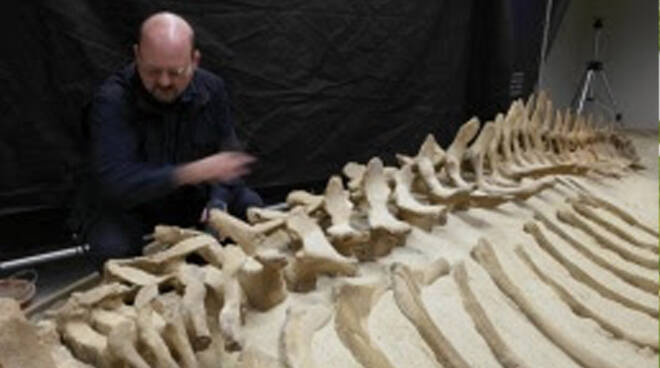 Parco Paleontologico Astigiano